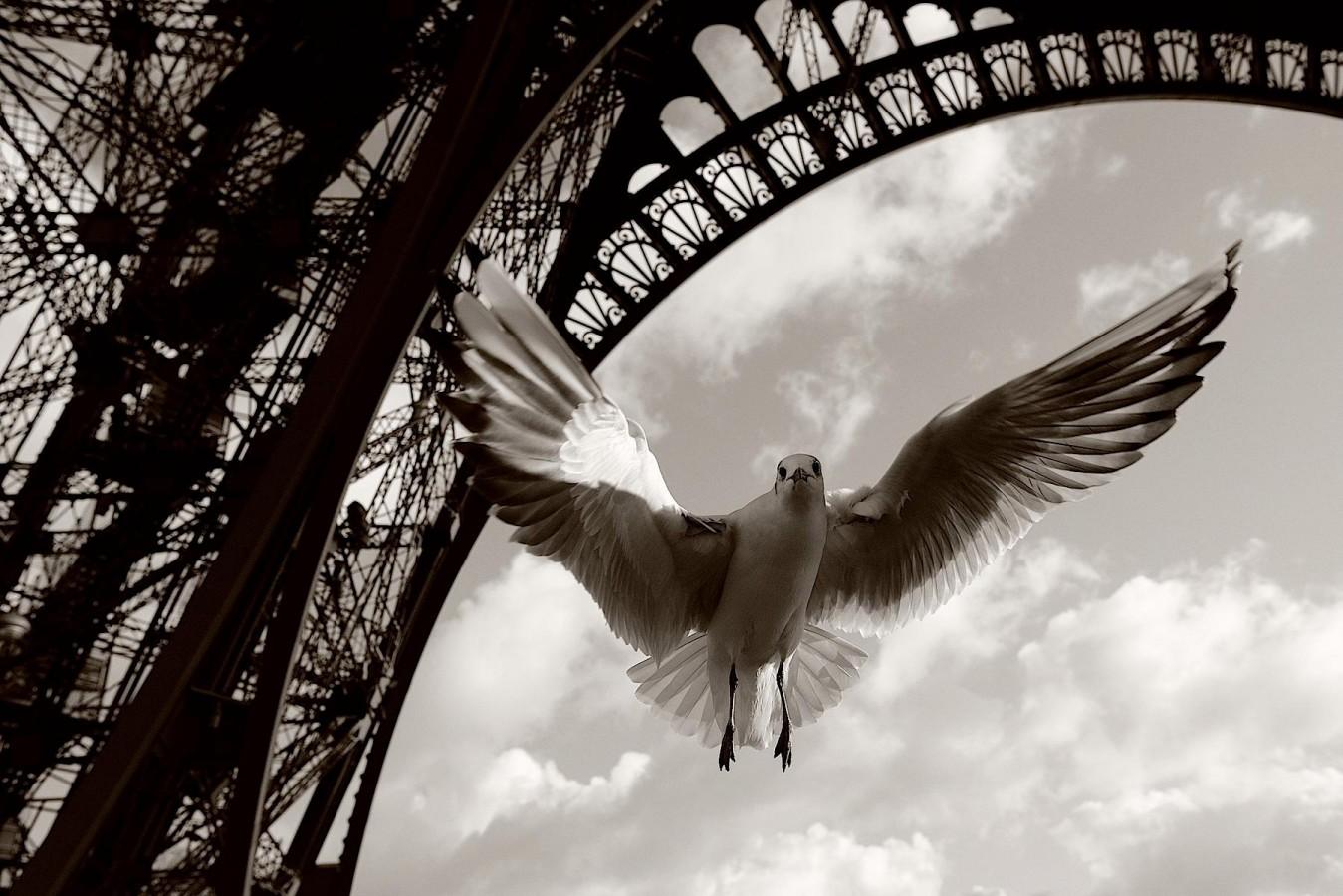 Freedom by Arman
